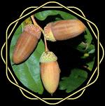 OnycoSolvecomposition: Des ingrédients naturels de haute qualité