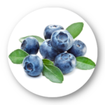 Extrait de mûrier blanc et baie d'açaï (euterpe oleracea)
